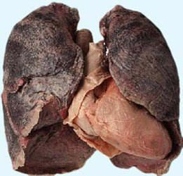 longen roken